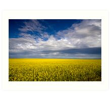 Carpet of Sunshine Art Print