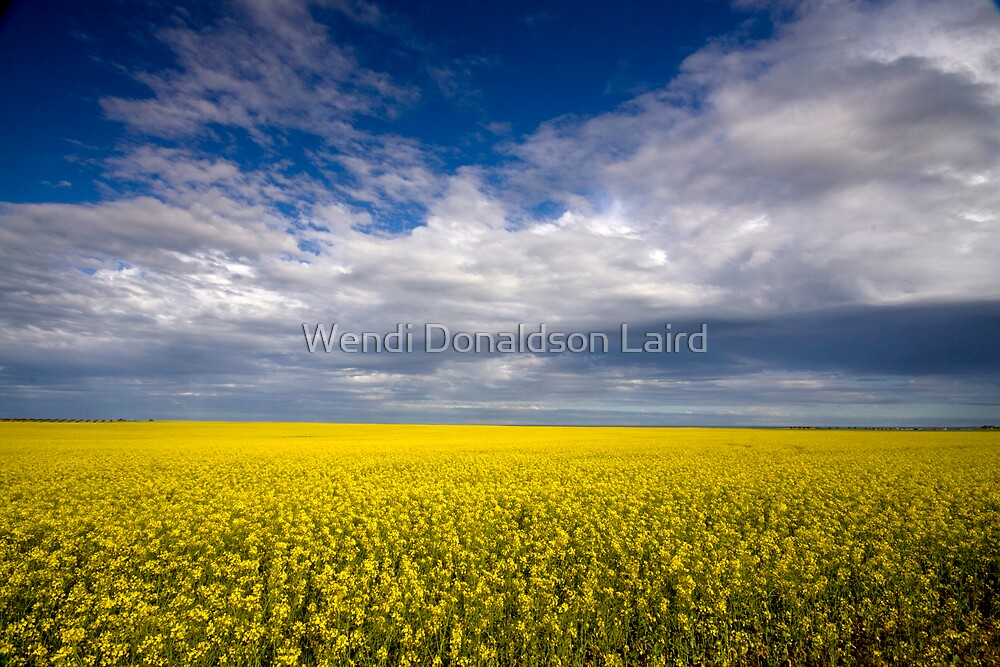 Carpet of Sunshine by Wendi Donaldson Laird
