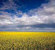 Carpet of Sunshine by Wendi Donaldson