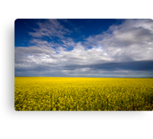 Carpet of Sunshine Canvas Print