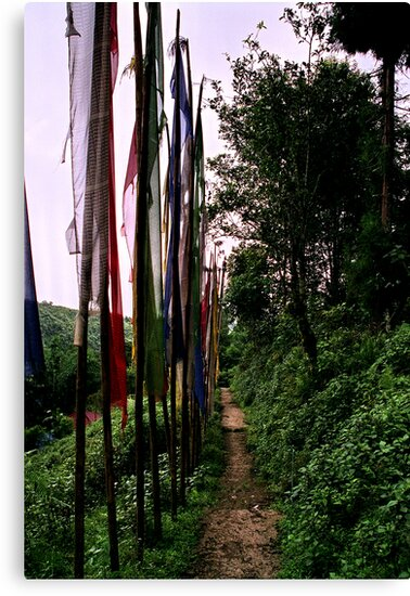 lungta, prayer flags. northenr sikkim, india by tim buckley   bodhiimages