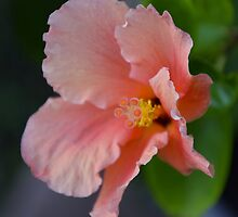 Peach Explosion by AhArtography