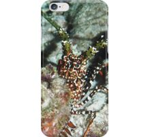 Spotted Spiny Lobster iPhone Case/Skin