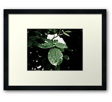 Subtle Droplets Framed Print