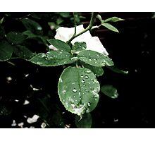 Subtle Droplets Photographic Print