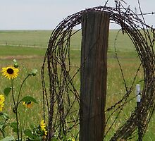 Bird, Wire and Sunflowers by Fareday