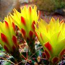 Cactus Promise Kept by Susan Bergstrom