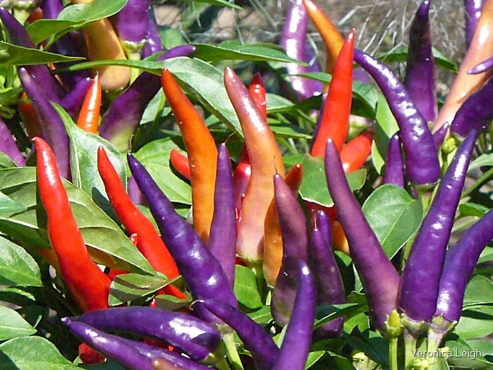 Color of Spice by Veronica Schultz