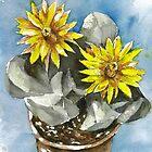 Cactus Bijlia Cana by rentia