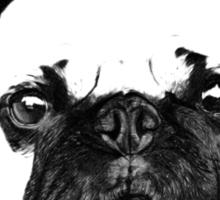 Pugs, Not Drugs Sticker