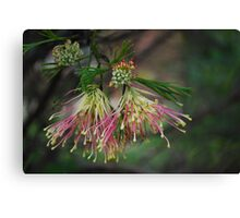 Fan Shaped Grevillia Canvas Print