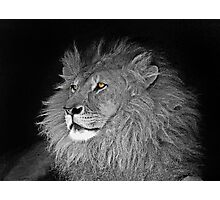 Lions Eyes Photographic Print