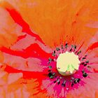 Poppy by Stan Owen