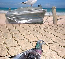 Seagull and Pigeon by robertemerald