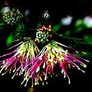 Fan Shaped Grevillia in Silhouette by Lozzar Flowers & Art