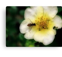 Hoverfly in Orton Canvas Print