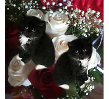 ADORABLE KITTENS AND ROSES,PILLOWS,TOTE BAG,SCARF,SKIRT,TRAVEL MUGS,TOTE BAG,ECT.. Photographic Print