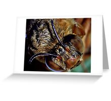 Bumble Bee  searching for some pollon Greeting Card