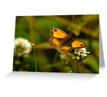 Meadow Brown Butterfly. Greeting Card