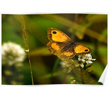Meadow Brown Butterfly. Poster