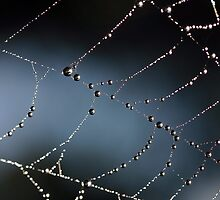 Mother Natures Diamonds by shutterjunkie