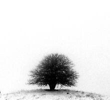 Same Tree by Alexandra Muresan