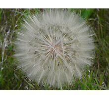 White Fluff Ball Photographic Print