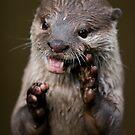 Charismatic Otter by shutterjunkie