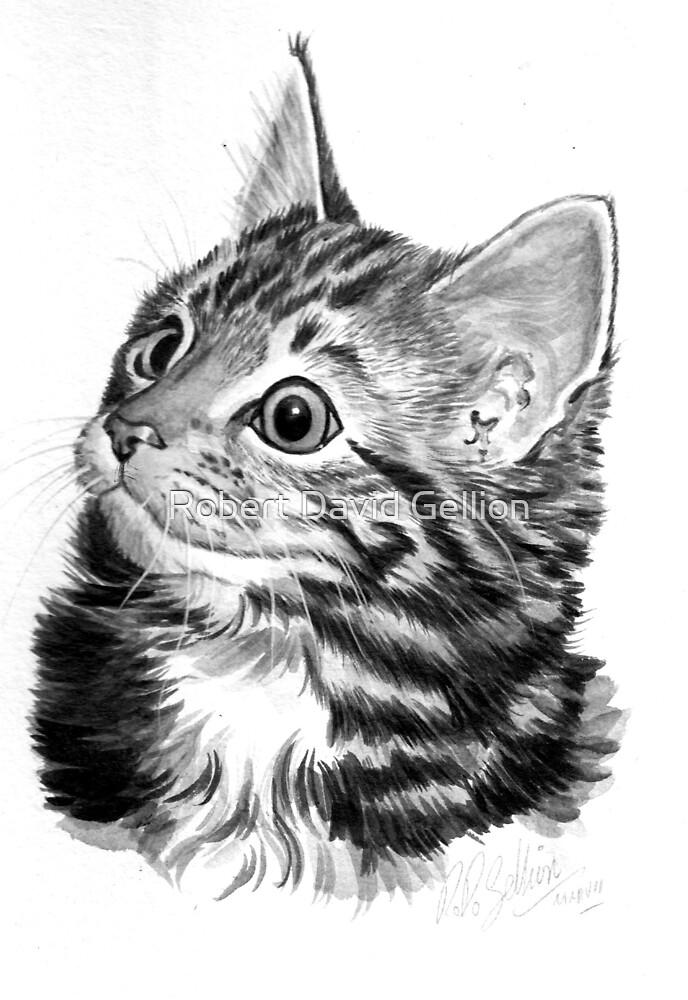 Kitten. by Robert David Gellion