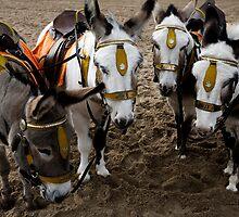Blackpool Donkeys by shutterjunkie