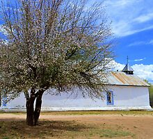 Blooming Apple Tree, Sangre De Cristo Chapel, N.M by Catherine Sherman