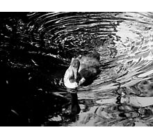 Worn and Ruffled Photographic Print
