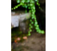 Hanging Garden Photographic Print