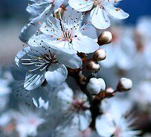Tungsten Bouquet by WendyJC