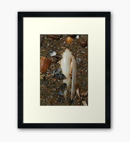 Buried Framed Print