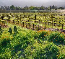Spring Vine and Poppies in Napa Valley by George Oze