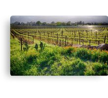 Spring Vine and Poppies in Napa Valley Canvas Print