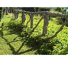 Willowbank Fence Photographic Print