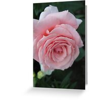Learned Petals Greeting Card