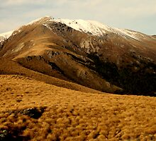Tussock Hills by Sophie cooper