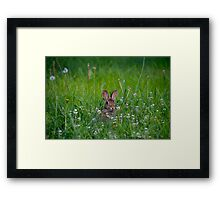 Bunny Rabbit in Grass Framed Print