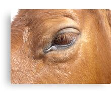 Gazing Into The Horse's Eye Canvas Print