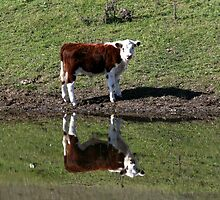 One calf----or Two ? by Lyn  Thomsen