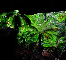Trowutta Arch State Reserve, NW Tasmania  by Garth Smith