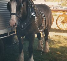 Clydesdale, Wingham Show by louisegreen