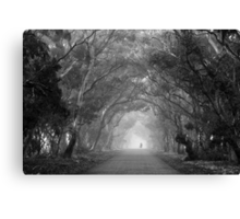 Tree Lane in mono Canvas Print