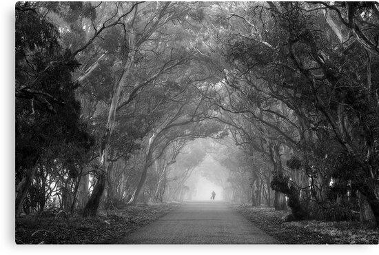 Tree Lane in mono by Hans Kawitzki