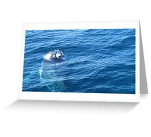 Whale Watching Us  Greeting Card