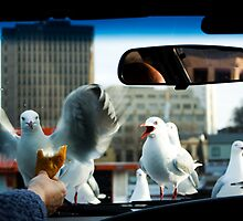 teasing the birds  Pentax K20D , Picture 2  by eisblume