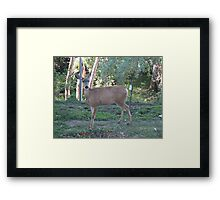 No You May Not Eat My Garden Framed Print